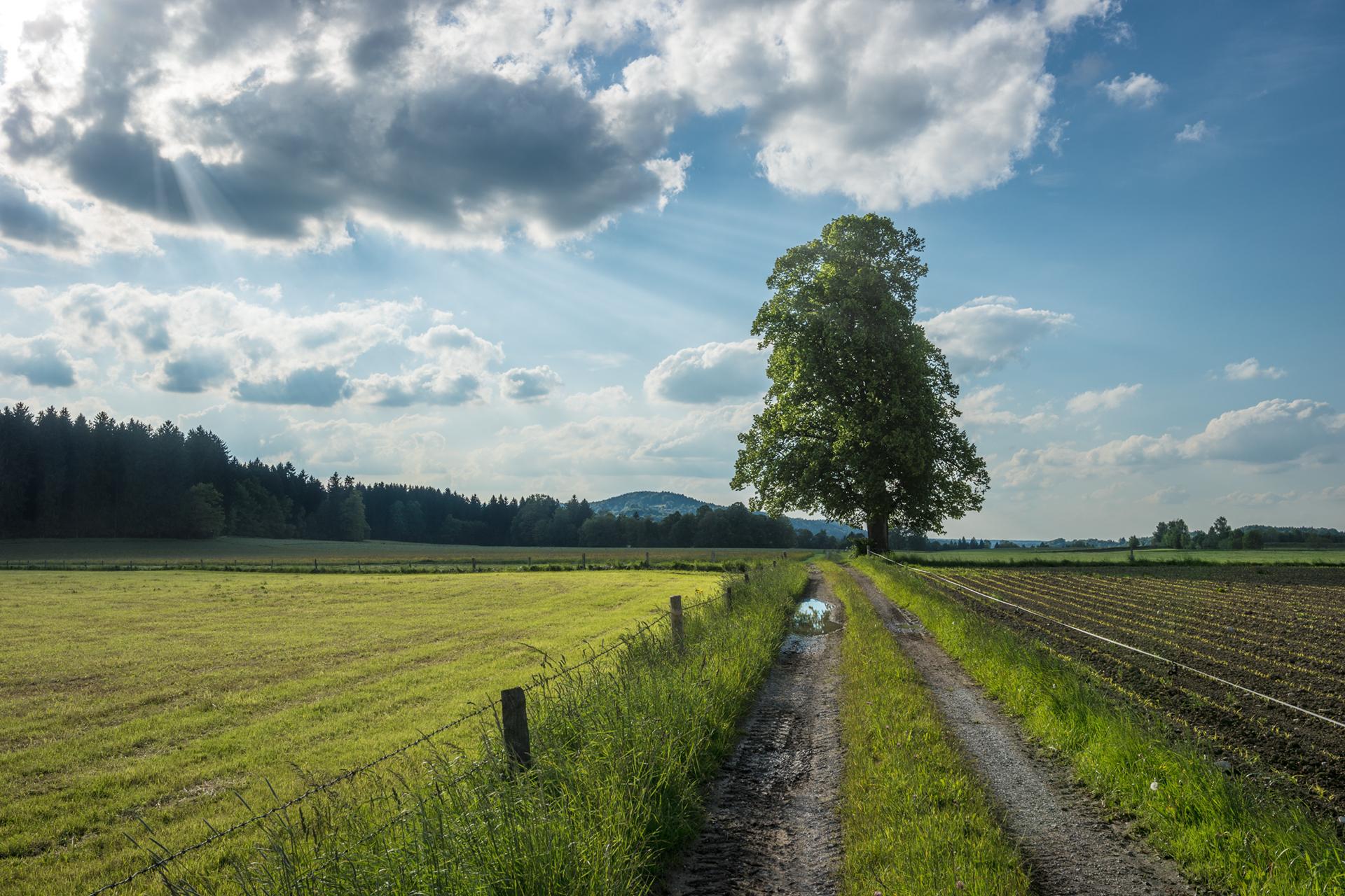 Agroturystyka – alternatywa dla tradycyjnych wakacji