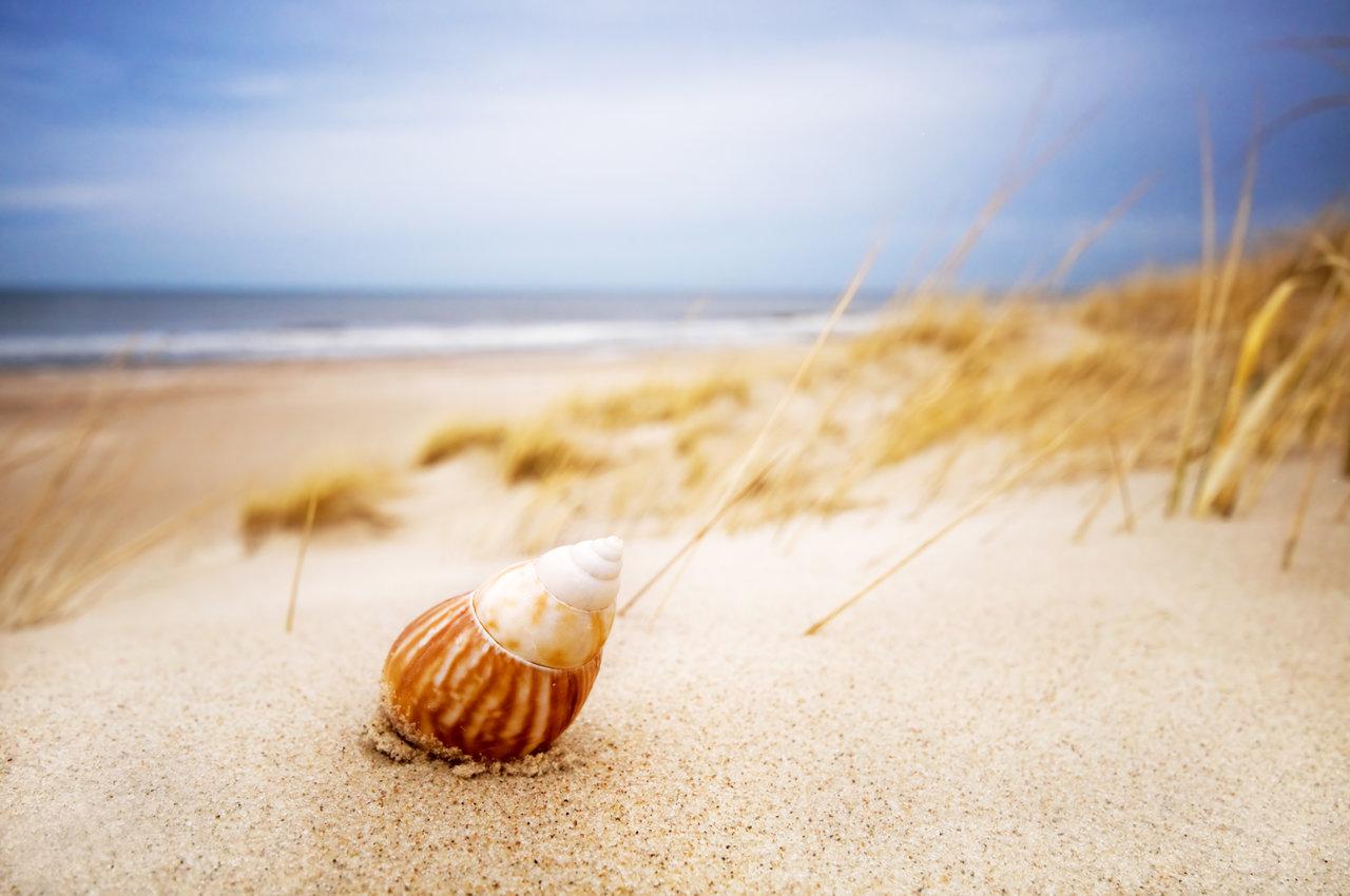białe piaski nad Zalewem